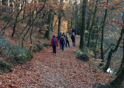 Groupe marche en forêt - Marie Duval sophrologue