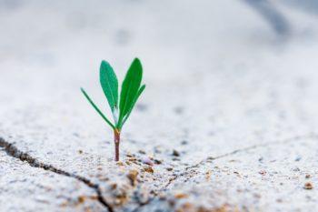 fleur poussant sur une terre aride-Marie Duval sophrologue