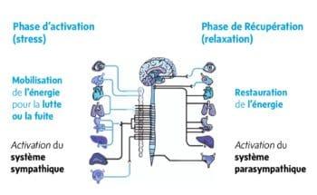 Réactions physiologiques du corps face au stress-Marie Duval sophrologue