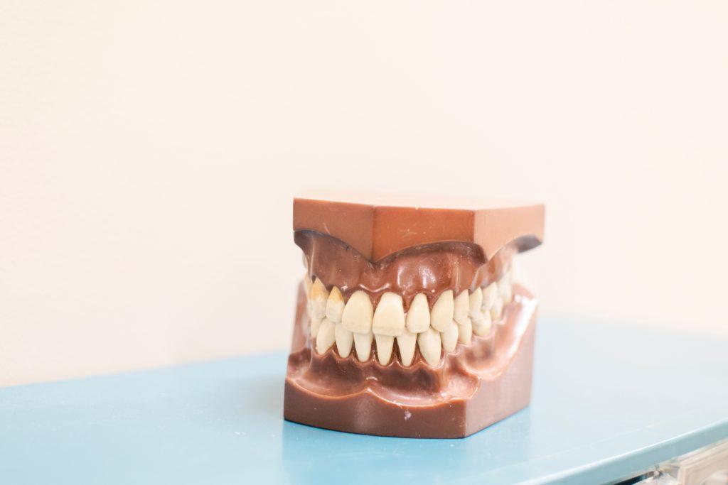 Mâchoires dentition - Marie Duval sophrologue