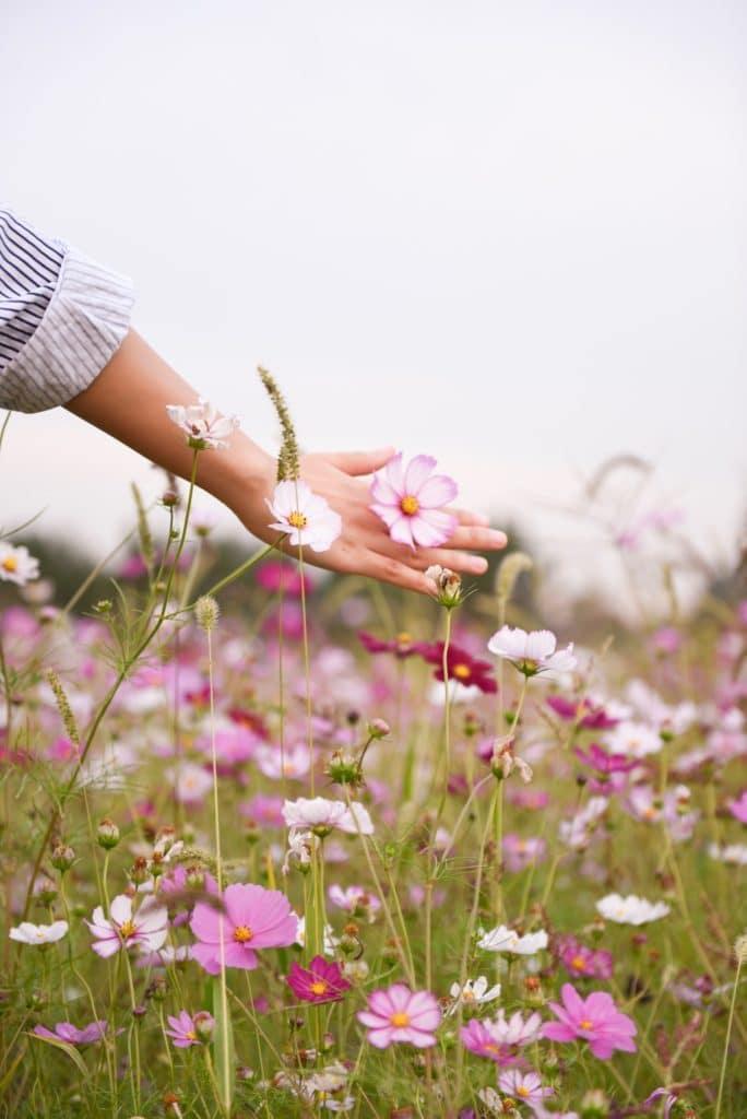Fleurs roses dans un pré - Marie Duval sophrologie