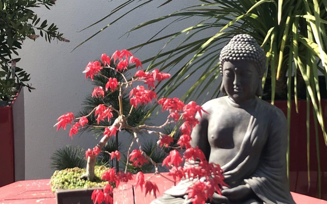 Bonsai rouge posé à coté d'un boudha -Marie Duval sophrologue